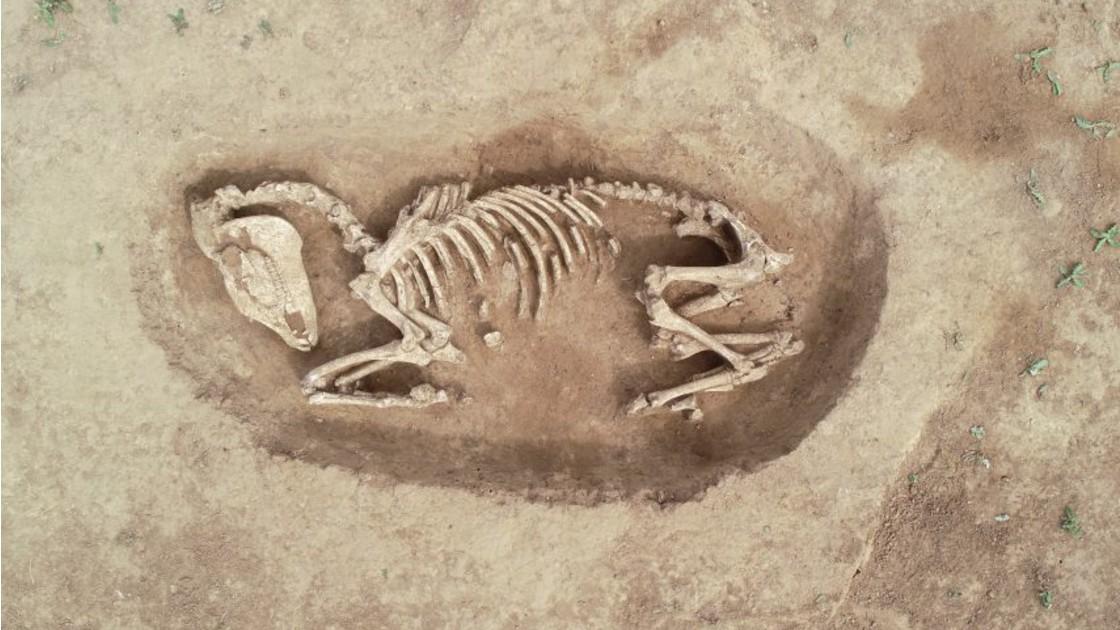 Matériel de fouille archéologique