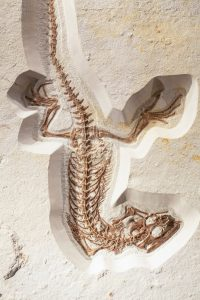 squelette-dinosaure