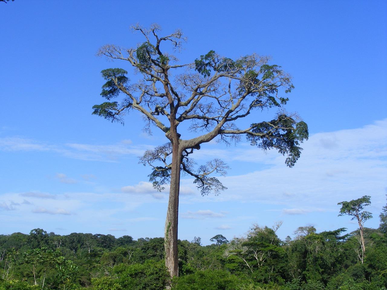 Cameroun et ses ressources naturelles.