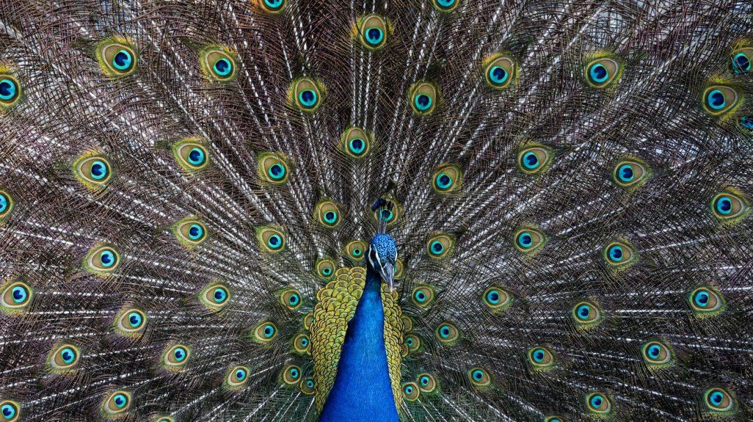 Des exemples d'animaux aux capacités extraordinaires